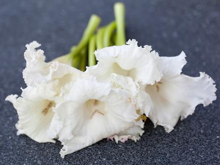 lamiales: Dolichandrone serrulata (DC.) Seem blossom. herb Stock Photo