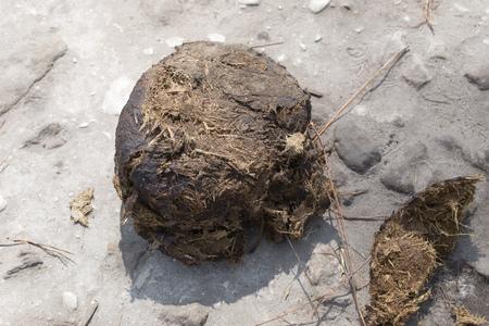 fecal: A heap of Thai elephant dung in a phu kradueng National Park in Thailand.