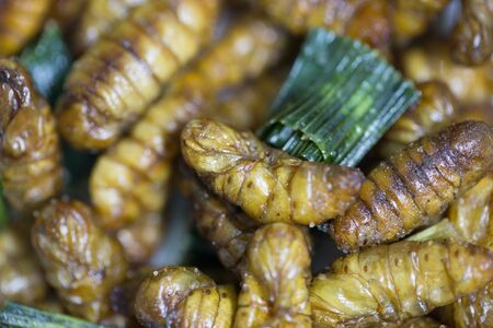 pan tropical: Fried silk worm is the food in thai.