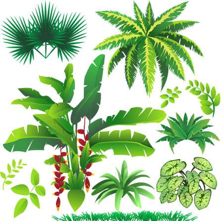식물은 열대 자연 디자인, 좋은 요소를 잎