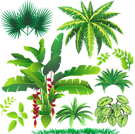 rain: plant leaves, great element for your tropical nature design