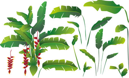 tropicale: Feuilles de bananier Illustration