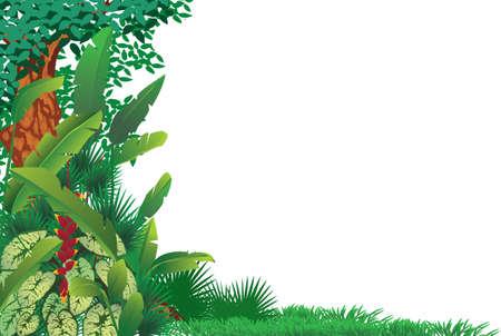 エキゾチックな熱帯林 写真素材 - 20778463