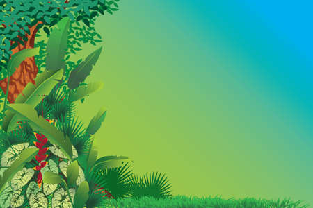 exotic tropical forest Vector