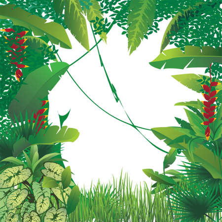 vector illustration of exotic tropical forest, blank spot on the middle Stock Photo