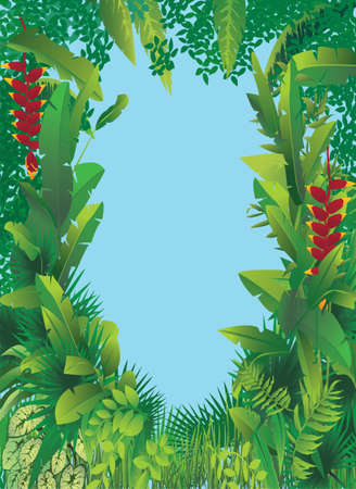 amazon forest: vector illustration of exotic tropical forest with blue sky in the middle