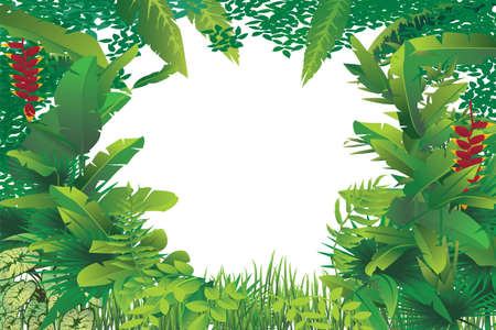 vector illustration of exotic tropical forest with white blank spot in the middle