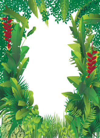 amazon forest: vector illustration of exotic tropical forest with white blank spot in the middle
