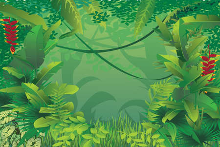 vector illustration of exotic tropical rain forest Çizim