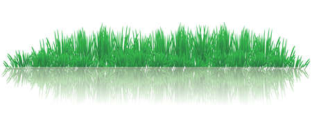 grass blade: vector illustration of reflective grasses on water