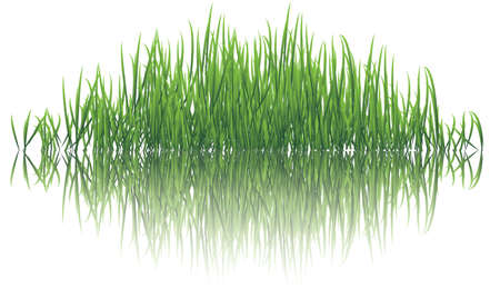 vector illustration of reflective grasses on water Vector