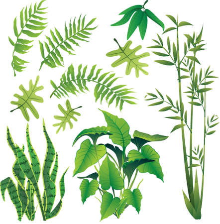 bamboo forest: exotic plant leaves design element vector collection set Illustration