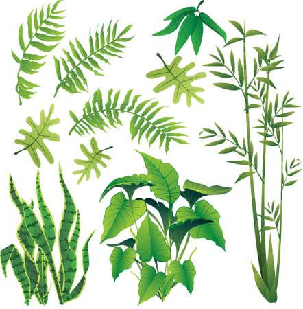 jungle plants: exotic plant leaves design element vector collection set Illustration