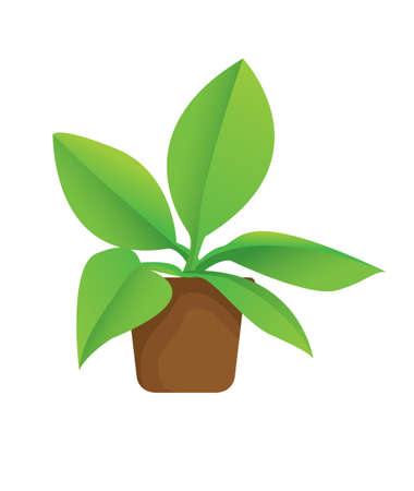 illustration of potted plant in cartoon style