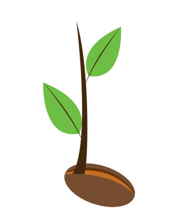 plant seed: Vector illustration of a young plant with two leaves grow from a seed isolated on white Illustration