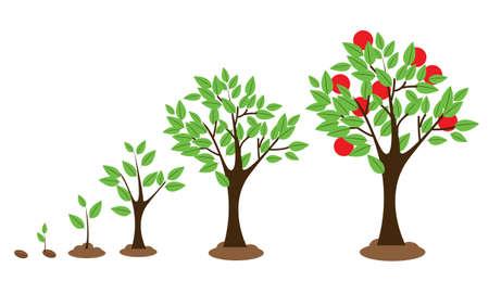diagrama de arbol: Ilustración vectorial de diagrama de crecimiento de los árboles aislados en blanco Vectores