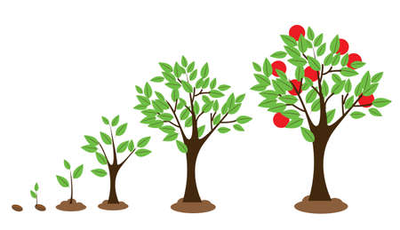 small plant: Vector illustration of tree growth diagram isolated on white