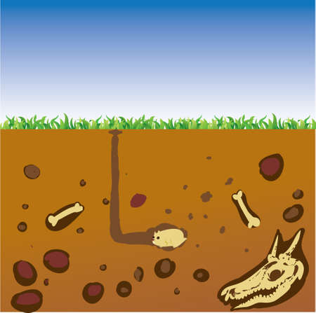 cut grass: Vector illustration cut section of land with blue sky, grass, underground soil with dirt, mud, stone, bones and gophers in hole Illustration
