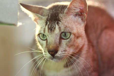 kitty cat: Cute grey tabby kitty cat under sunshine Stock Photo
