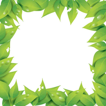 leaves frame: Vector illustration of leaves frame with empty space in the middle, with shadows and water drops on it Illustration