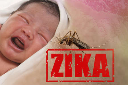 insect: Health issue concept, image of crying baby bitten by Aedes Aegypti mosquito as Zika Virus carrier