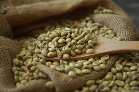 gunny: Raw coffee beans with wooden scoop in gunny sack
