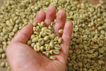coffee grains: Hand showing raw coffee beans with blurred coffee beans on background Stock Photo