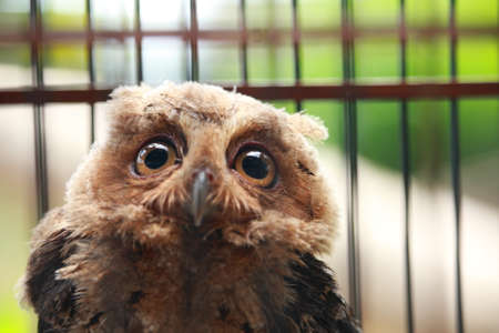 mistreatment: Animal photo, portrait of an owl in cage, owl sanctuary