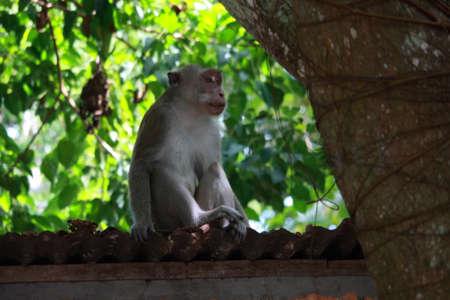animal photo: Animal photo, image of a monkey sitting on cabin roof