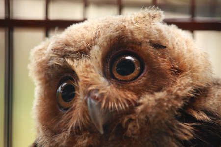 animal photo: Animal photo, portrait of an owl in cage, owl sanctuary