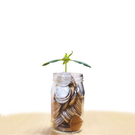 Coins in glass money jar savings with growing plant, financial concept. On wooden table against white background with copy space 免版税图像
