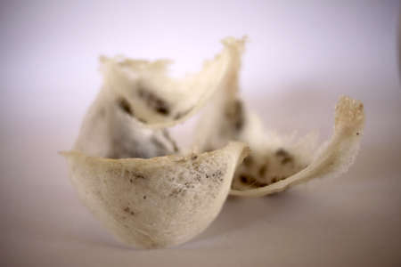 Close up image of newly fresh harvested unprocessed swallow bird nest, Asian luxury healthy meal