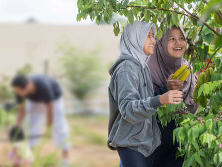 Happy Asian muslim mother and daughter smiling while harvesting star fruit at their home garden. healthy familiy eating organic fresh food