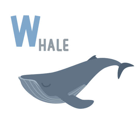 biggest animal: Big letter W and blue whale as an illustration for alphabet for children.