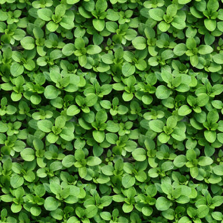 Seamless background with spring small leaves Standard-Bild
