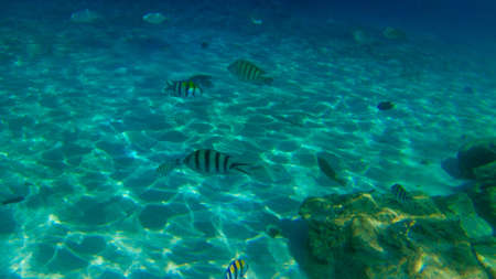 aquarium hobby: scenery of fish swimming together.visible noise due to high iso