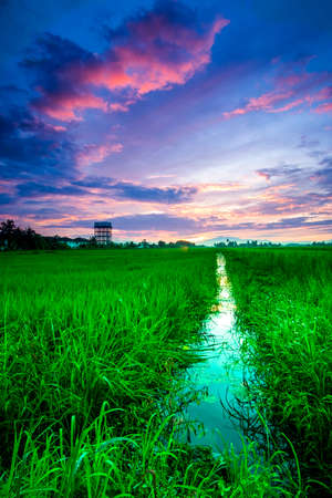 scenery of sunset at paddy field in Penang,Malaysia.Visible noise due to high ISO. 免版税图像