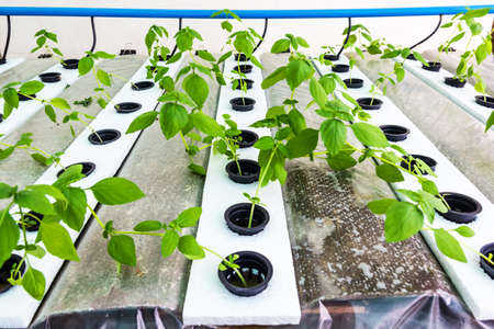 Close up shot hydroponic vegetable farm photo