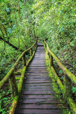 Wooden bridge in tropical rain forest photo