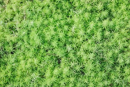 A photo of green leaves pattern Zdjęcie Seryjne