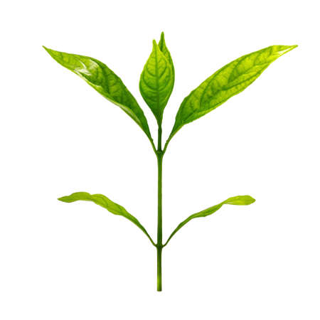 A photo of Small plant on isolated white background with clipping path