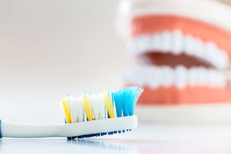 A photo of Brush teeth and Demonstration Teeth Model, Selective focus, Soft focus