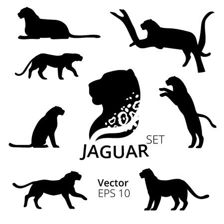 Jaguar set van silhouetten vector Stock Illustratie