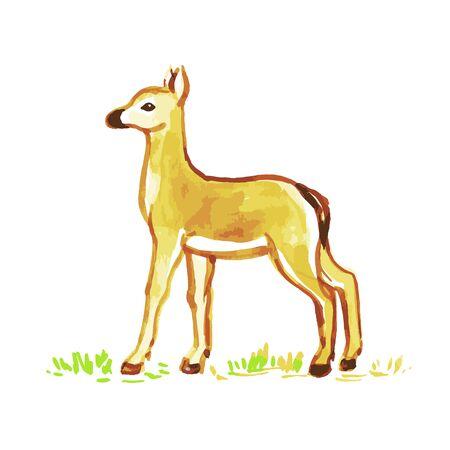 doe: The watercolor picture doe. Illustration of little deer. Illustration