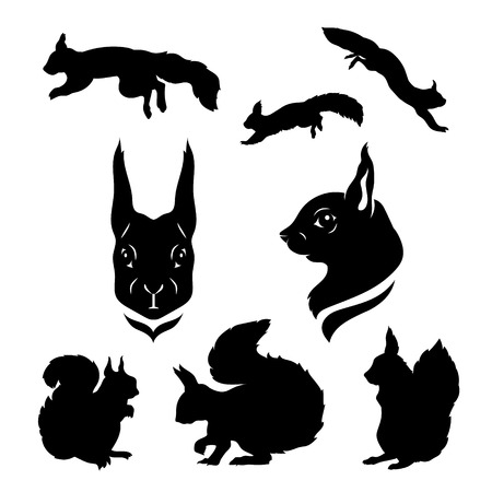 wild animal: Squirrel set of silhouettes vector. Collection of animal icons.