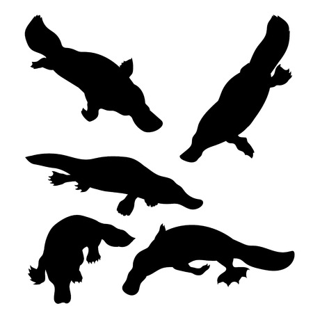 platypus: Platypus set of silhouettes vector. Collection of animal icons.