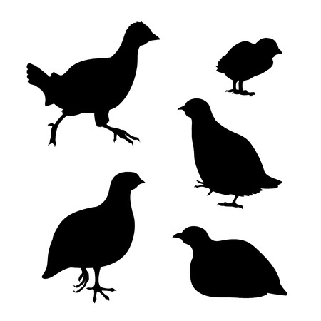 kuropatwa: Partridge Zestaw sylwetki wektor. Kolekcja ikon zwierząt.