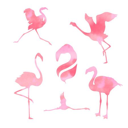 flamenco ave: Flamingo rosa acuarela, conjunto de siluetas vector