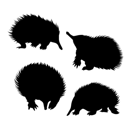 echidna: Echidna set of silhouettes vector. Collection of animal icons. Illustration