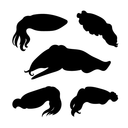 cuttlefish: Cuttlefish set of silhouettes vector. Collection of animal icons.